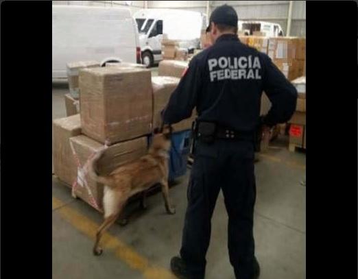 Elementos de la Policía Federal.
