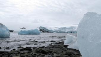 Bloques de hielo en la costa de la Base de Carlini de Argentina, frente al glaciar Fourcade en la Antártida. (Reuters, archivo)