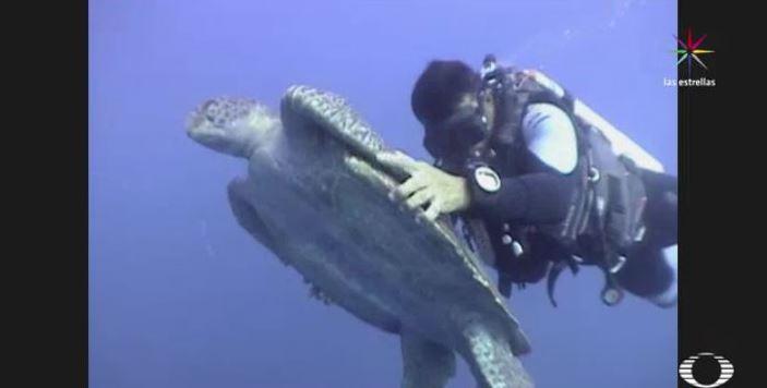 Buzos intentan salvar a una tortuga de la pesca ilegal. (Noticieros Televisa)