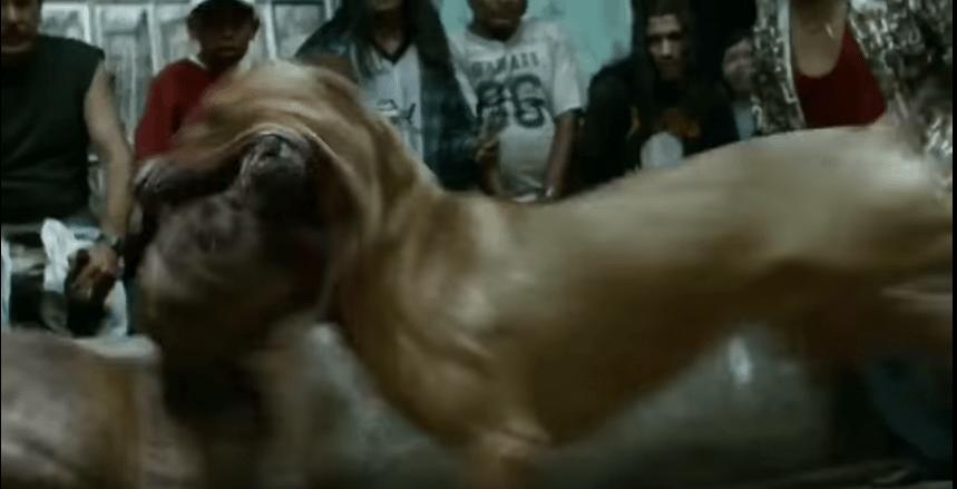 Rodrigo Prieto amores perros