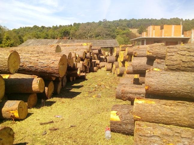 La Profepa clausura CATs en Michoacán; las autoridades hallaron madera ilícita en las instalaciones