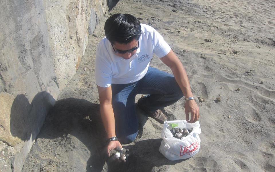 Los huevos de tortuga fueron protegidos para evitar su saqueo (Profepa)