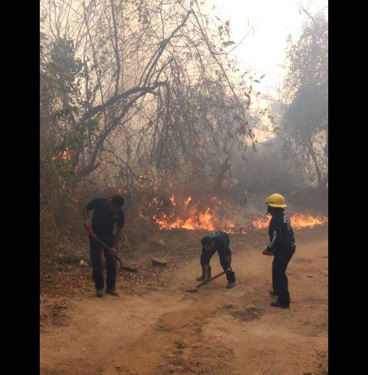 Sofocan incendio en Parque Nacional El Veladero, en Acapulco, Guerrero