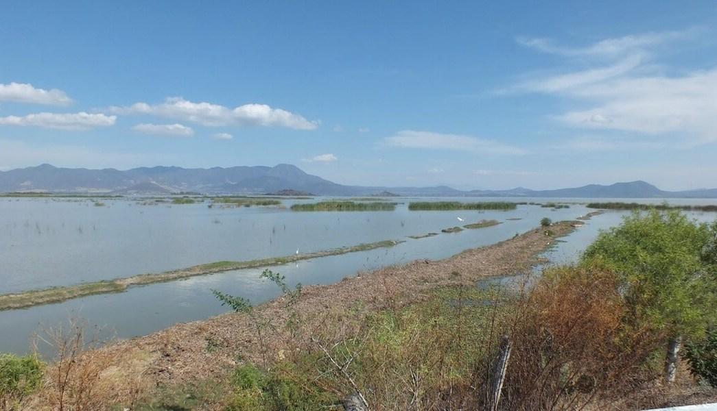 El Lago de Cuitzeo se ubica a 300 kilómetros de la Ciudad de México. (Sistema Michoacano de Radio y Televisión, archivo)