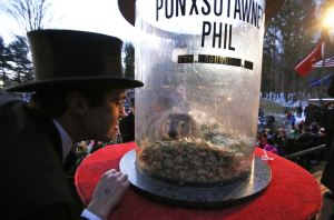 La marmota Phil de Pennsylvania ve su sombra