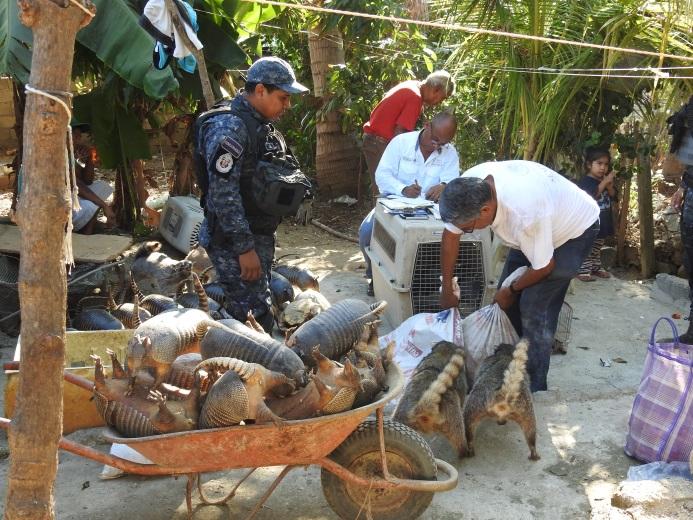Profepa asegura 180 ejemplares de vida silvestre en Acapulco (Profepa)