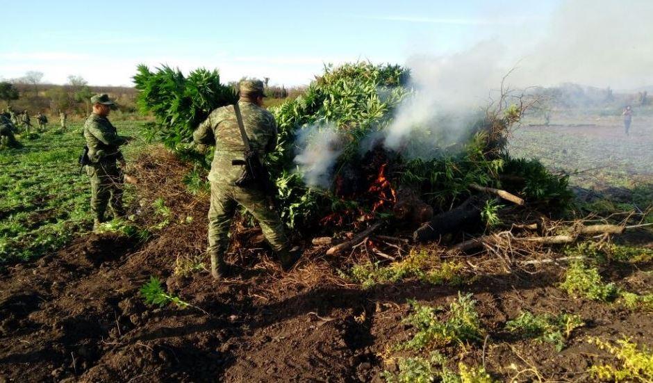Ejército destruye 10 hectáreas de marihuana y uno de amapola en Sinaloa