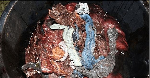 Unas 30 bolsas de plástico y otros desechos fueron hallados en el estómago de una ballena varada en Noruega. (University of Bergen)
