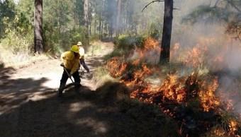Alertan por temporada de incendios forestales en México.(Twitter/@CONAFOR)