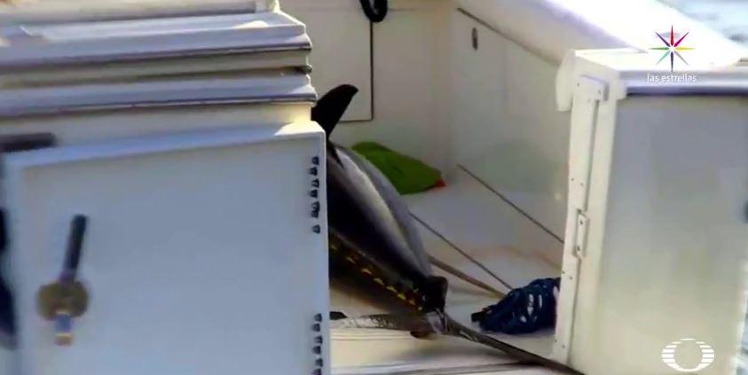 En los últimos años se han documentado casos de pesca deportiva ilegal en zonas núcleo de las cuatro islas. (Noticieros Televisa)