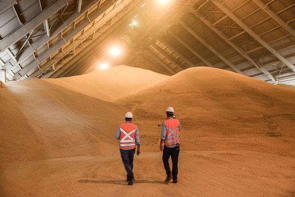 Productores de azúcar demandan acuerdos que sean benéficos para la exportación de azúcar a Estados Unidos. Defienden que el abasto en México está asegurado. (Getty Images)