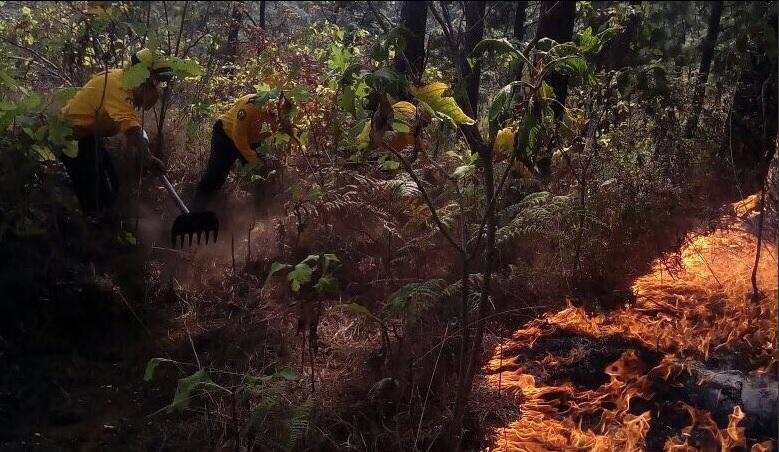 Autoridades controlan fuego en el Cerro de la Cruz, en Uruapan, Michoacán; miles de incendios han afectado más de 26 mil hectáreas en México en el 2017( Twitter @CONAFOR)