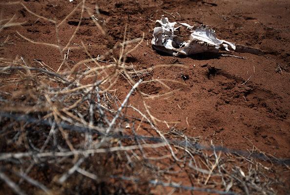 La sequía sigue afectando varias zonas de Veracruz. (Getty Images, archivo)