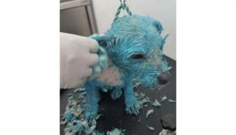 perrita azul, muñeca, matan a perrita, solventes, pintura, picahielo