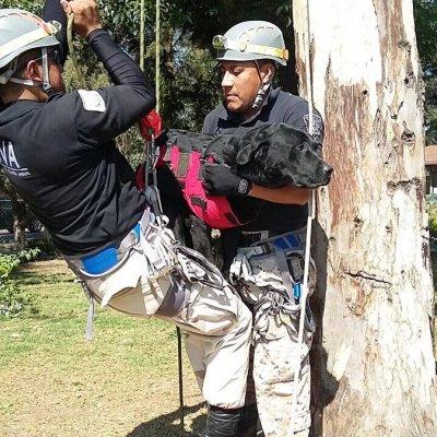 Brigada Animal de la CDMX atiende 30 denuncias al día por maltrato y abandono