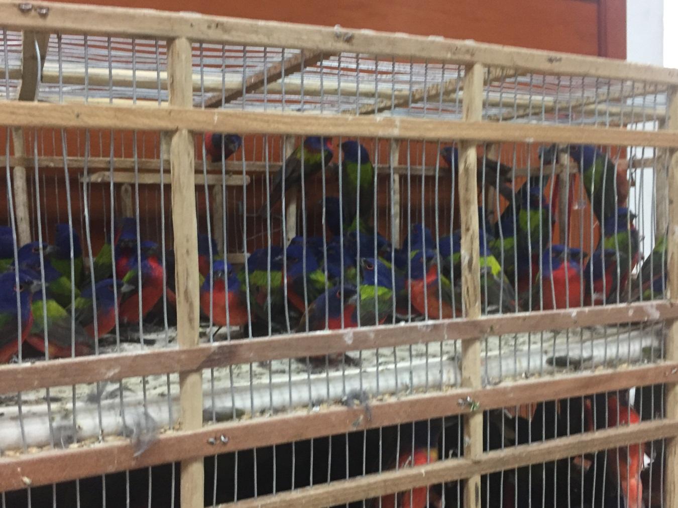 Profepa asegura aves en Tepic, Nayarit. (Profepa)