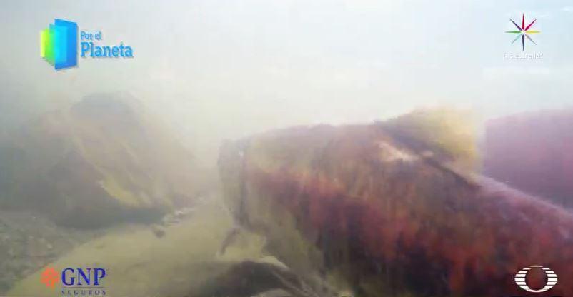 Salmón rojo de Alaska (Por el Planeta/Noticieros Televisa)