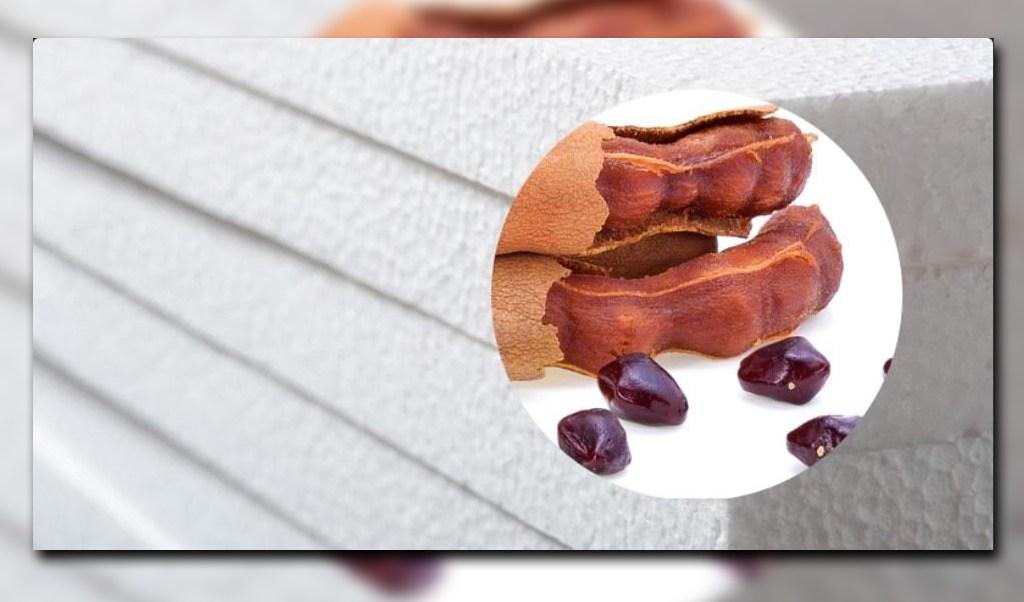 Una tercera parte del tamarindo se compone de semillas; en la UNAM usan el fruto para crear una espuma que puede sustituir al unicel