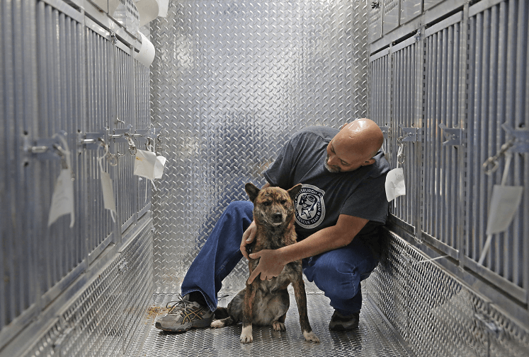 Un voluntario del rescate de animales conforta a uno de los perros que fue trasladado de Corea del Sur a Estados Unidos. (AP)