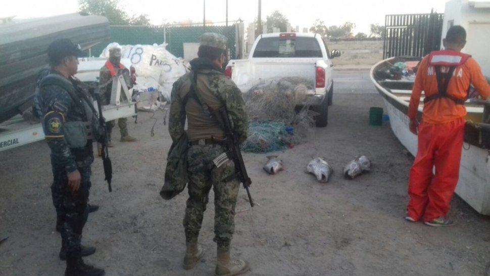 Aseguran Semar y Profepa 20 totoabas muertas en BC. (Twitter @Profepa)