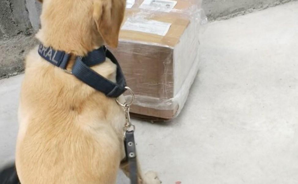 Binomio canino de la Policía Federal. (Twitter: @PoliciaFedMx/Archivo)