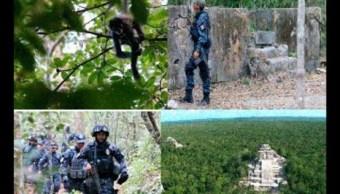 La Gendarmería tendrá más vigilancia de la conservación de los recursos naturales.(Twitter@RBCalakmul)