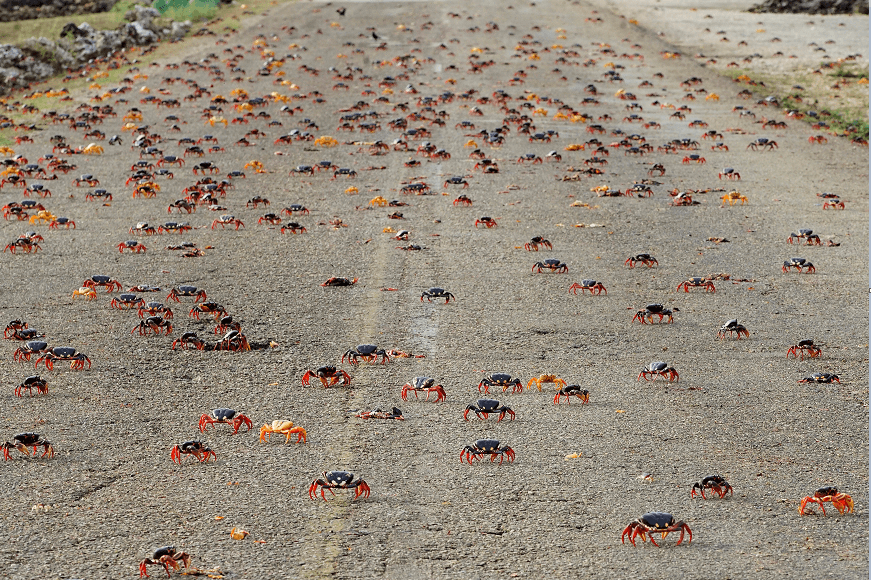 Cangrejos en Bahía de Cochinos, Cuba. (Reuters)