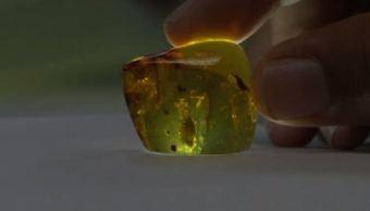 Cochinilla de hace 23 millones de anos atrapada en ámbar