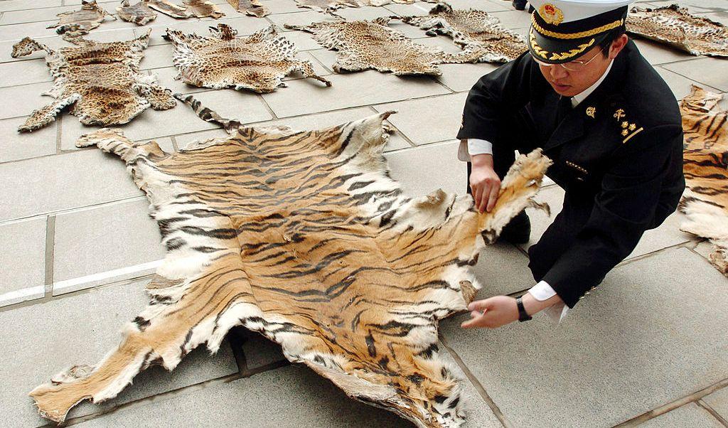 La caza furtiva en los sitios de la Unesco pone en peligro a las especies, pero también la economía local.