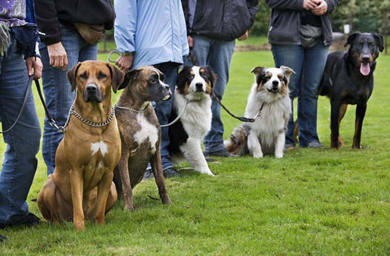 Análisis de ADN permitirán a la policía de Bélgica determinar con qué frecuencia los excrementos de un perro no son recogidos en las calles (Getty Images/archivo)