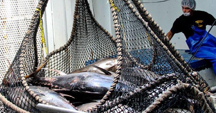 Con este reconocimiento se demuestra que México realiza las actividades de pesca de en forma sostenible y adecuada (Twitter/@Conapesca)