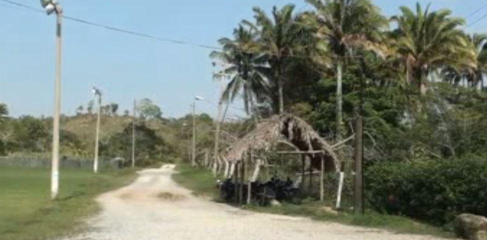 Plantios de coco afectados por plaga en Veracruz (Noticieros Televisa)