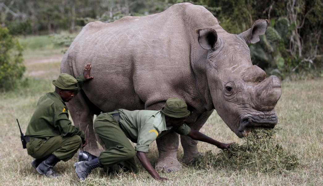 Resultado de imagen para sudan rinoceronte blanco
