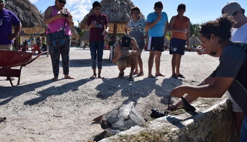 Con esta tortuga ya son 15 las que han aparecido muertas por causa de la pesca furtiva. (Twitter @ELSURCAMPECHE)