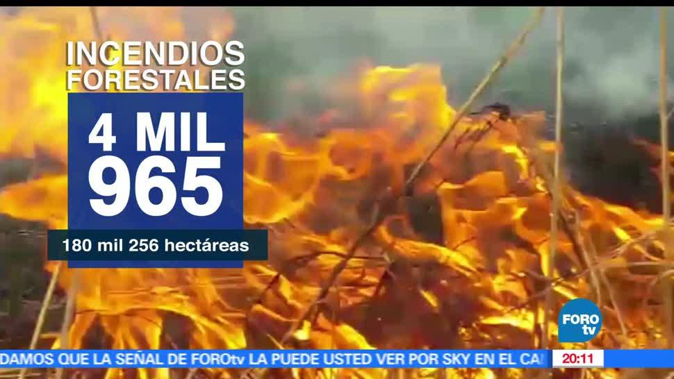 noticias, televisa news, Incendios Forestales, Incendios, Forestales, altas temperaturas