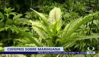 uso medicinal de la marihuana, México, Enfermedades, Salud