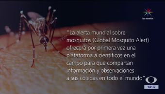 picadura, mosquito, salud, global