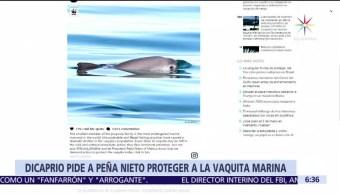Leonardo Di Caprio, presidente, Enrique Peña Nieto, vaquita marina