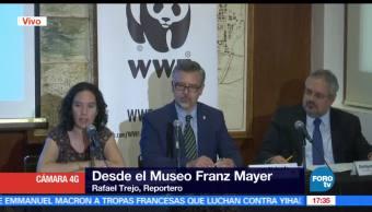Sólo quedan 30, vaquitas marinas, México, Fondo Mundial para la Naturaleza WWF