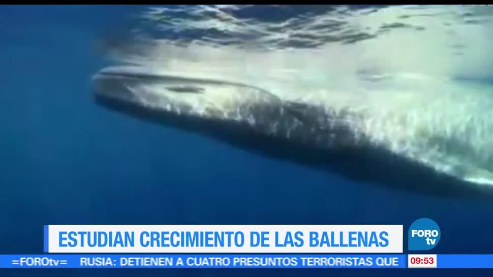 Científicos, registro fósil, ballenas barbadas, animales