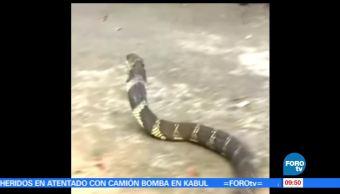 Habitantes, continente africano, solución mexicana, picadura de serpientes