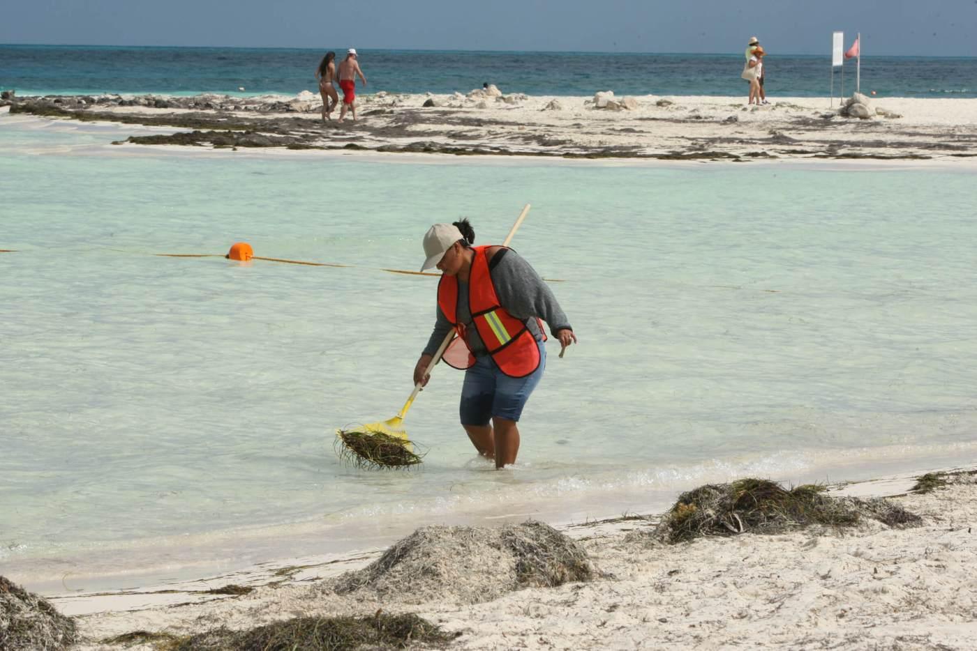 Trabajos de limpieza por sargazo en playas de Cancún. (Notimex, archivo)