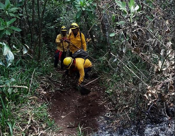 Atención de incendios forestales en Veracruz. (Twitter @CONAFOR)