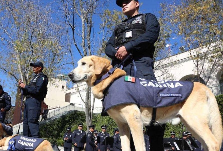 Policías federales apoyados con un binomio canino aseguraron un paquete con marihuana.( @SEGOB_mx )