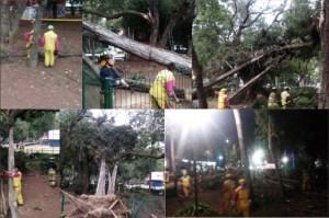 Varios árboles afectan vialidades de la CDMX