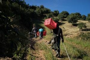 Personas se dirigen a plantacion de aguacate