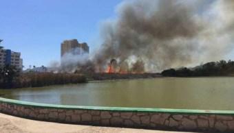 Incendio, bosque, sinaloa, fuego, bomberos, lesionados