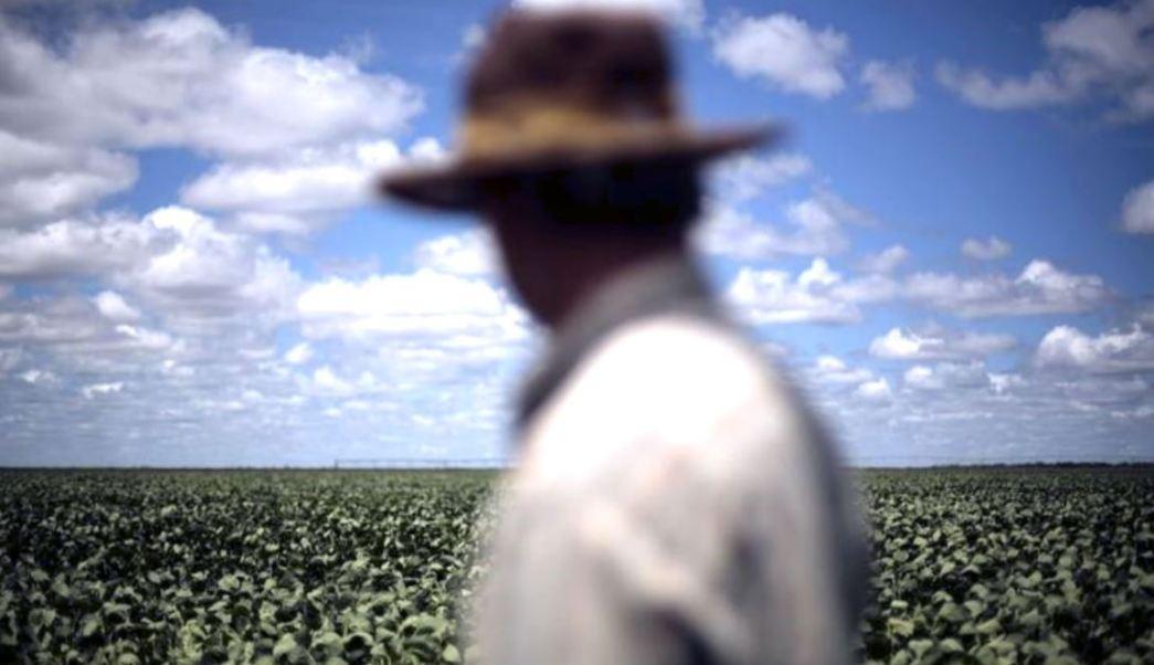Jornalero observa plantacion en Chihuahua