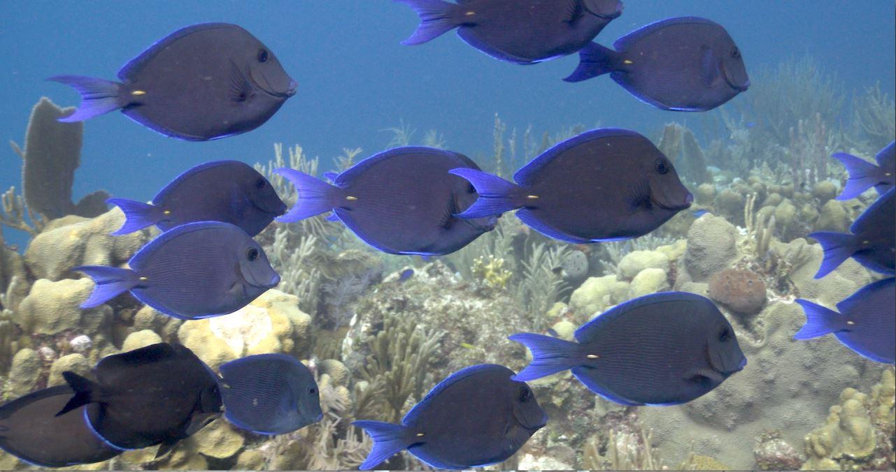 Jardines de la reina santuario marino preservado por for Como llegar a jardines de la reina cuba