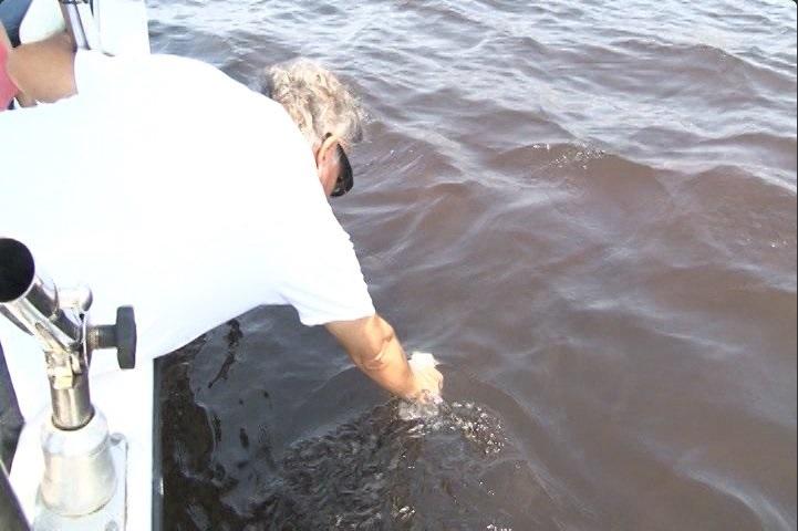 Monitorean el agua de mar para detectar marea roja